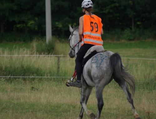 Koń- Stres- Człowiek
