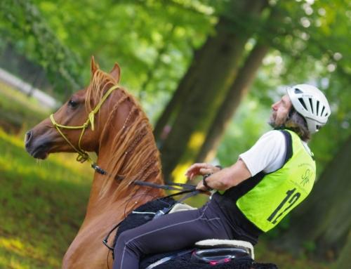 Rozmawiając z koniem