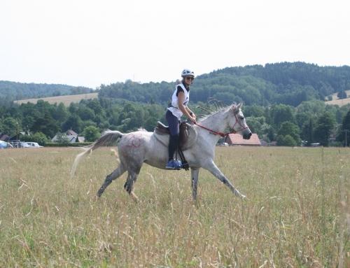 Powrót z końskiego-macierzyńskiego